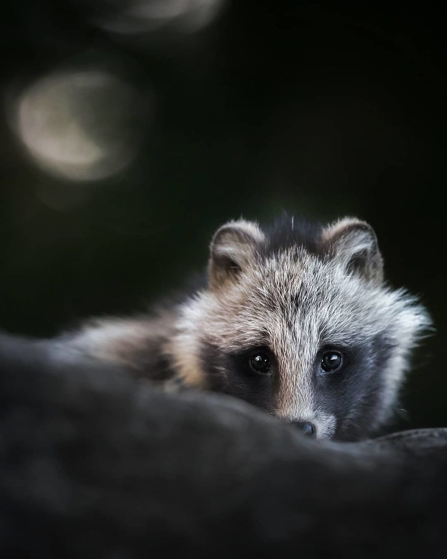 A Finnish Photographer Takes Adorable Photos Of Baby Animals That Would Melt Your Heart