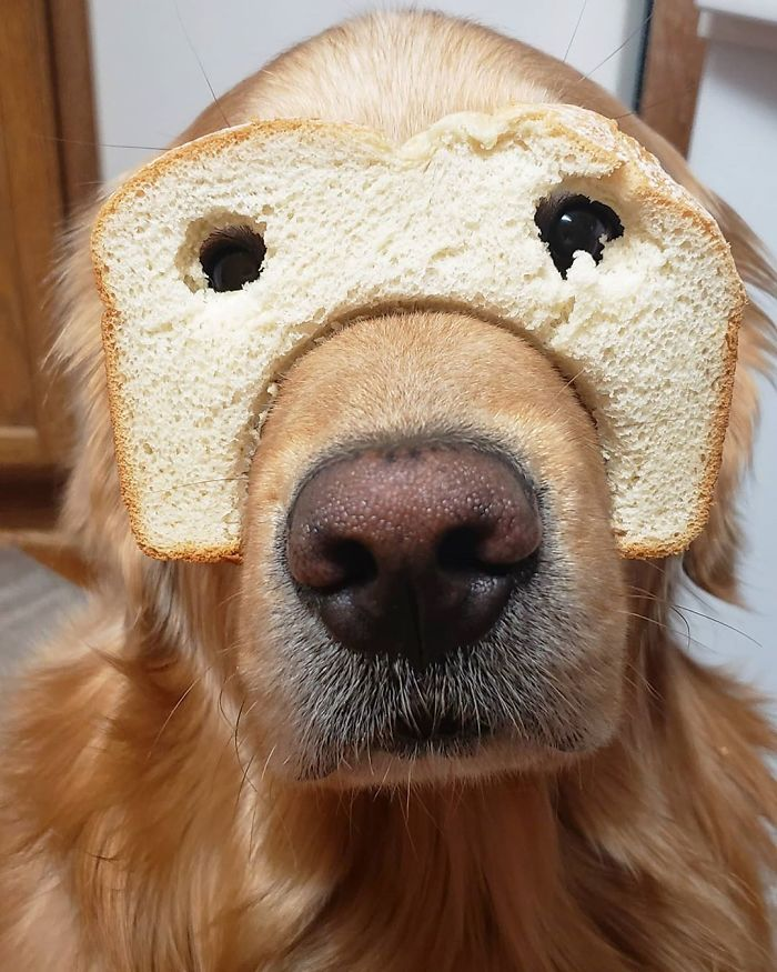 So Tired Of Everyone Calling Me Inbread Just Because I'm Purebread