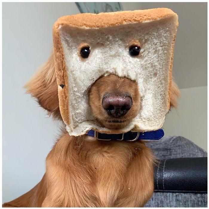 Who Benji? He's 100% Purebread