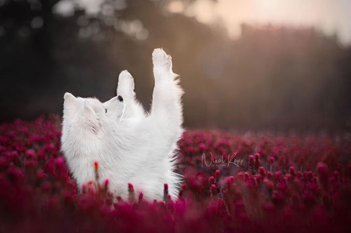 Photographer Nikol Kopp Takes Dreamy Portraits Her White Dog