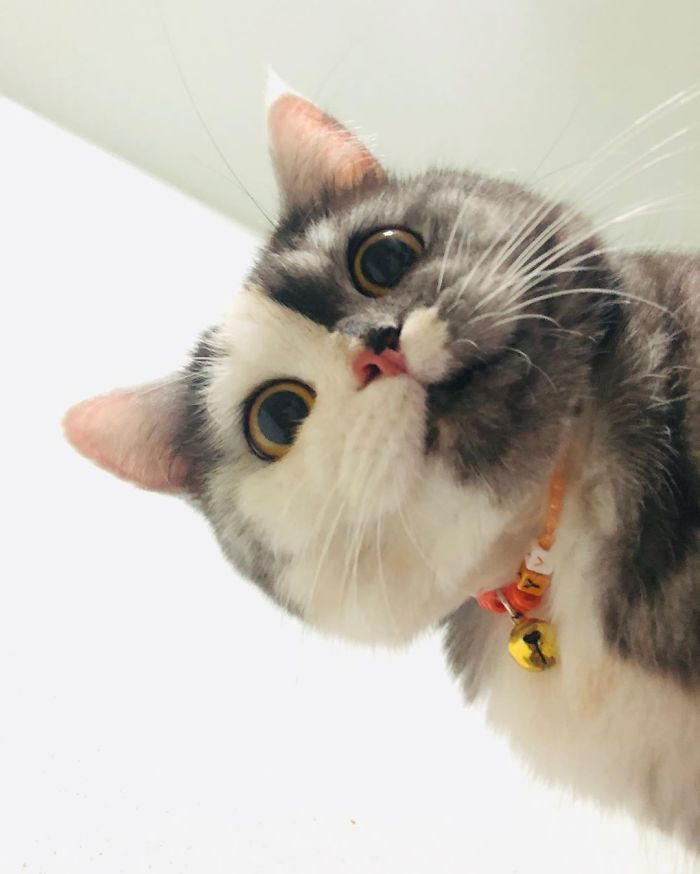 Meet 'Chimera,' The Cat Who Has A Unique Face And A Cuddly Personality