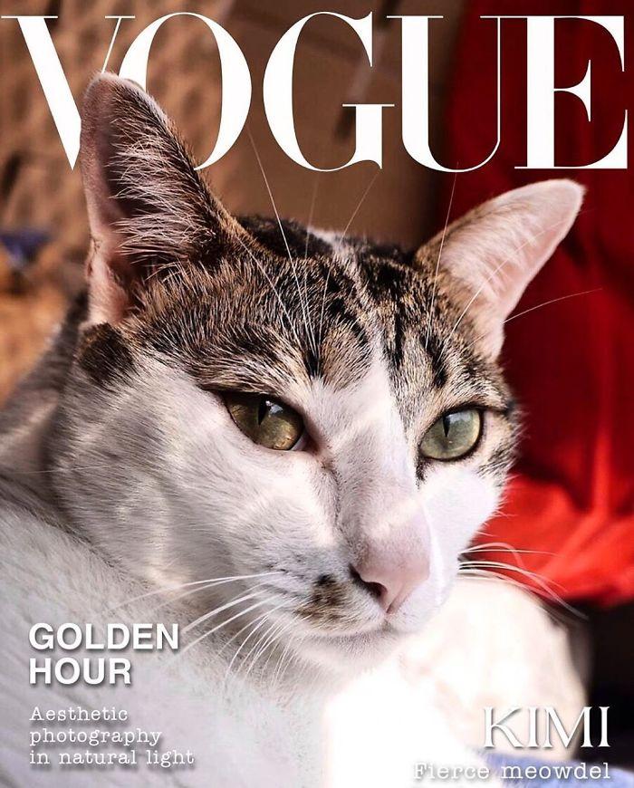 Vogue-Cover-Pets-Challenge