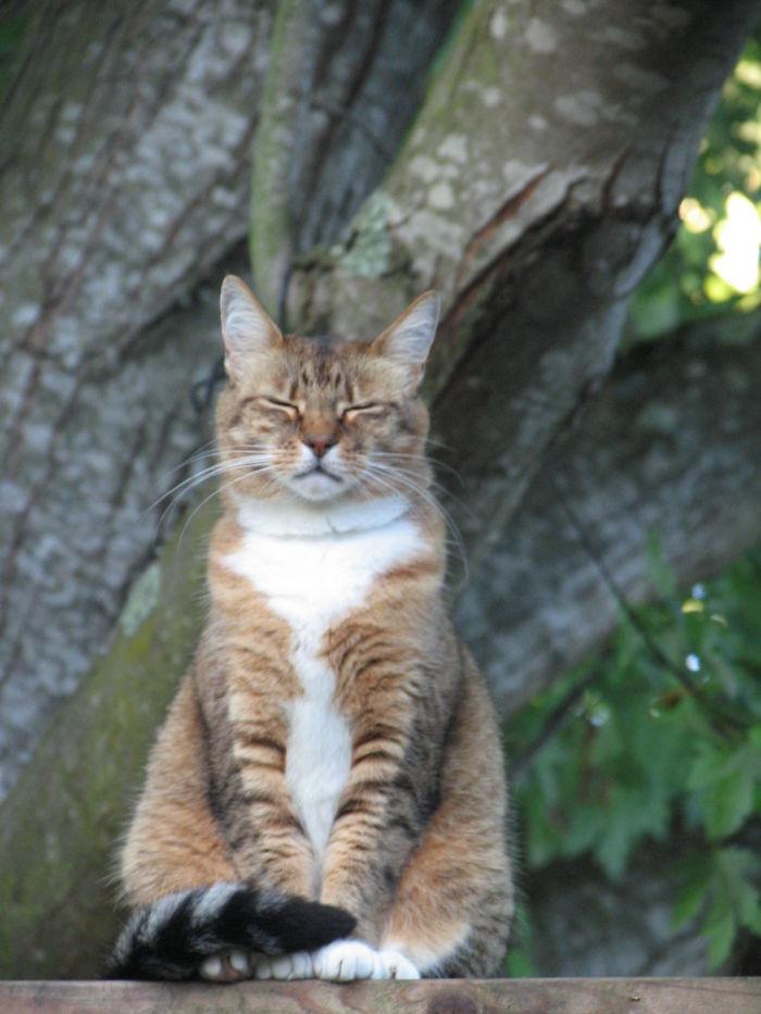Feline Meditation