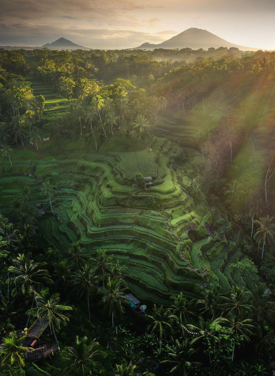 Rice Paradise