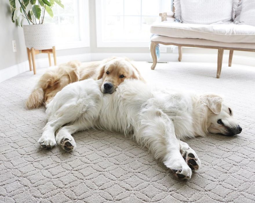 These Adorable Dogs Love Using Each Other As Pillows (26 Pics)