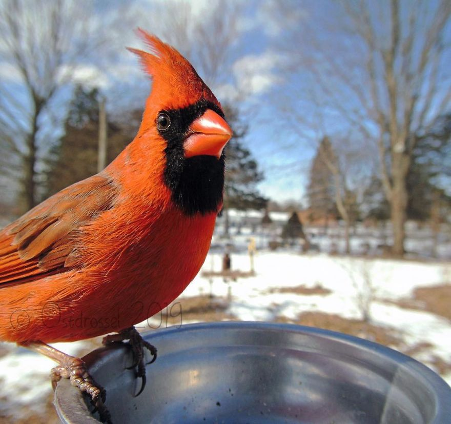 "Woman Puts ""Camera Trap"" In Her Backyard And Gets Amazing Shots Of Birds And Other Animals (New Pics)"