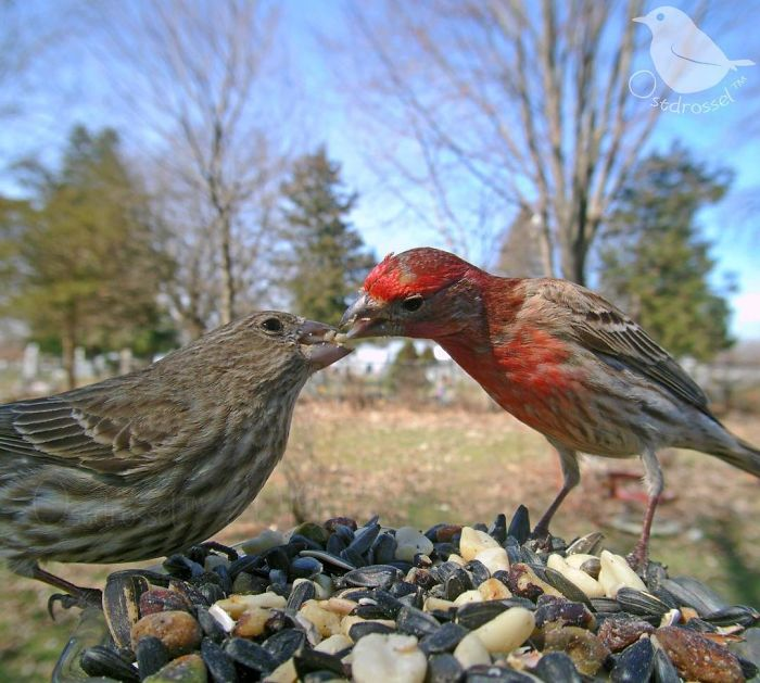 Woman Sets Up A Feeder Cam In Her Yard And The Photos Are Extraordinary (30 New Pics)