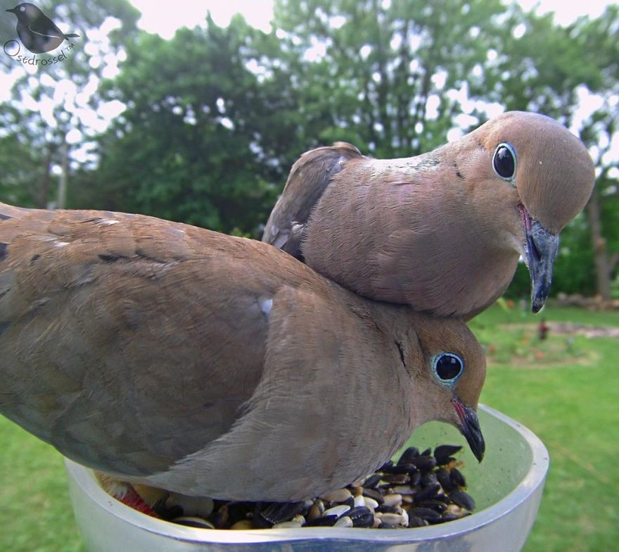 """Woman Puts """"Camera Trap"""" In Her Backyard And Gets Amazing Shots Of Birds And Other Animals (New Pics)"""