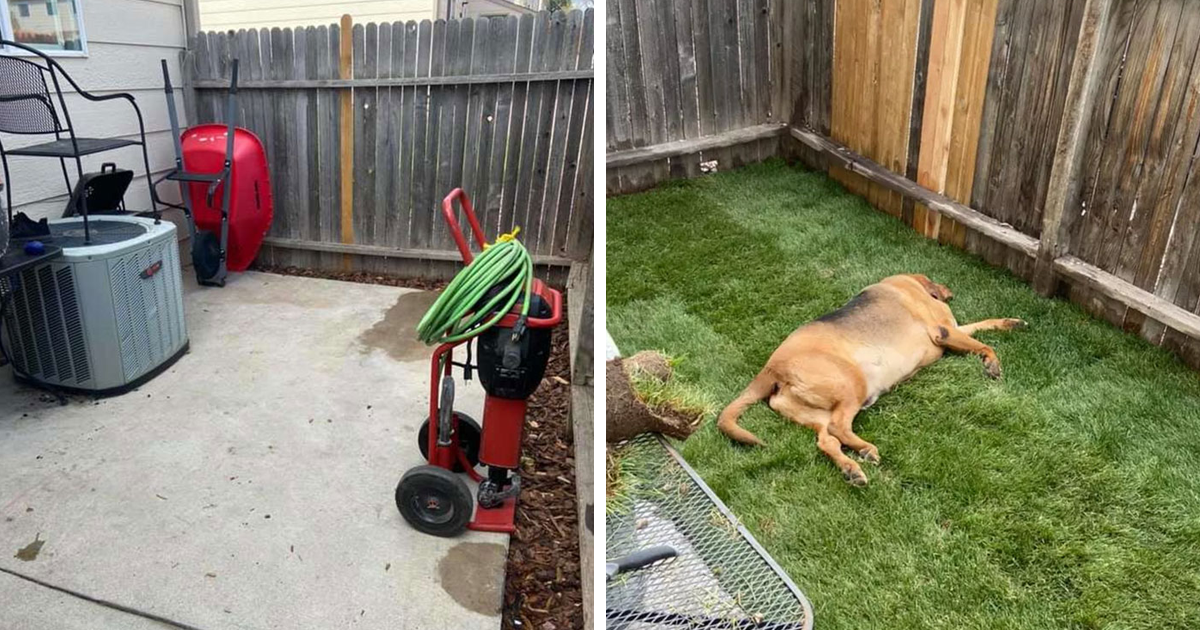 Rescue Dog That Never Had His Own Yard Gets A Surprise When His New Parents Build Him One - bored panda
