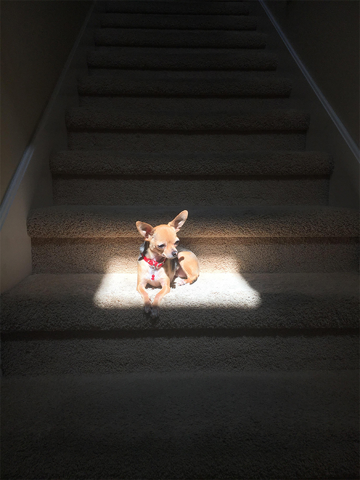 Köpeğim parlıyor gibi görünüyor çünkü güneşin küçük bir pencereden parladığı bu tek noktaya döşemeyi seviyor
