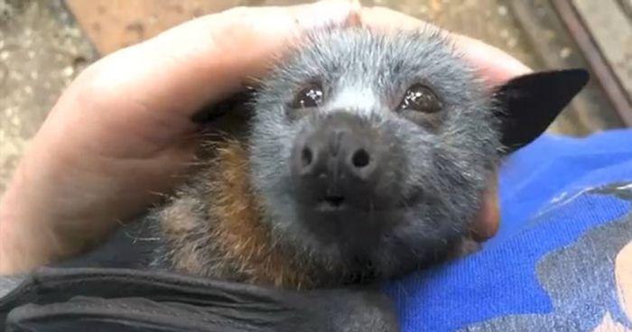 baby-bat-squeak-adorable-megabattie-fb-p