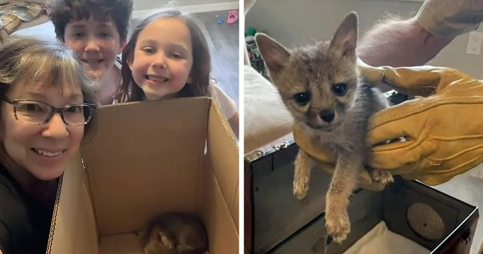 Family Saves Baby Fox That Confused Their Dog With Its Mother And Followed Them Home