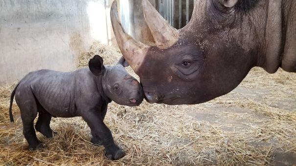 baby-rhino-5ee2e02e528a7.jpg