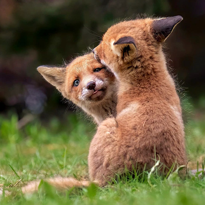 Finnish Photographer Captures Baby Animals Having Fun And Making Funny Expressions (30 Pics)