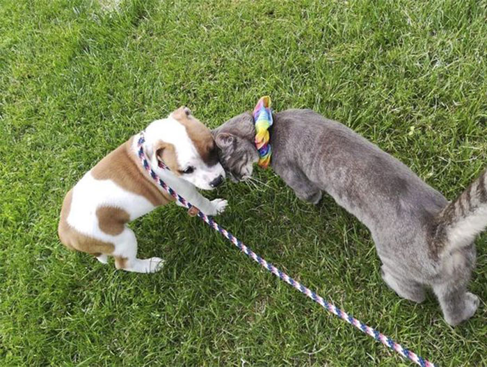 The Sad Goodbye Between Cat And Puppy Best Friends After Puppy Finds Forever Home