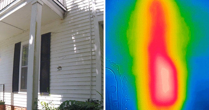 Bee Relocator Posts What He Found After Removing The Outside Wall From A Client's Home, And His Photos Go Viral