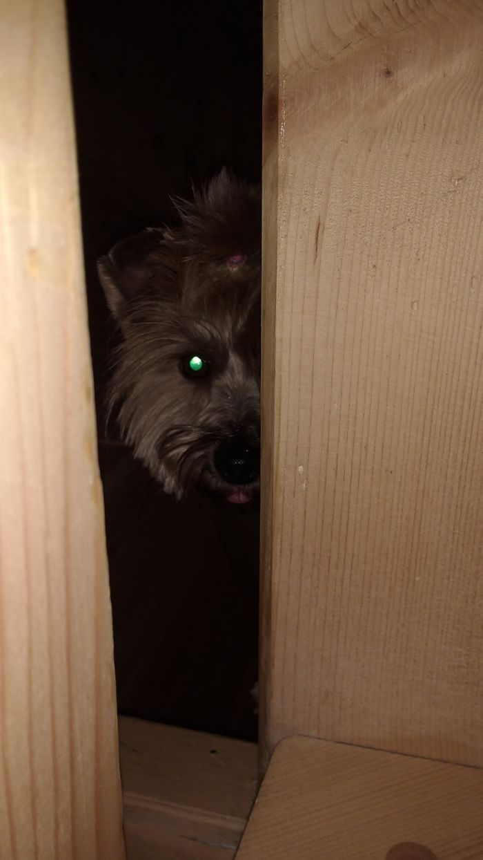My Dog Is Spying On Me Through The Open Staircase