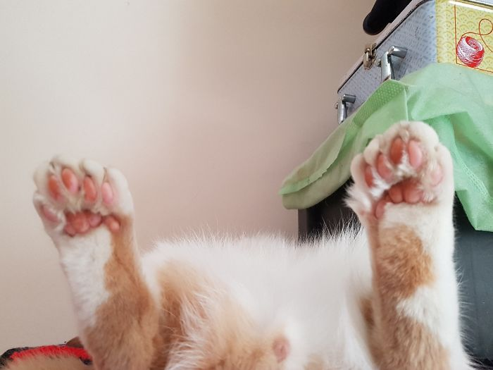 My Cat Yaari, Who Has Extra Toes And Loves Spending Time Sleeping Like This