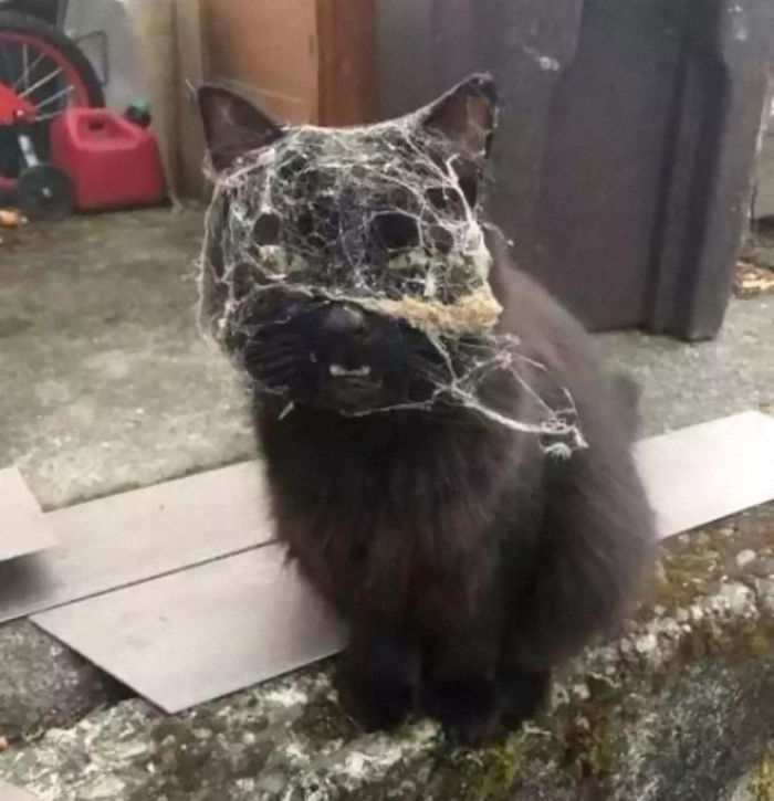 Cat Returns Home After, What Can Only Be Assumed To Be, A Fight With Spider-Man