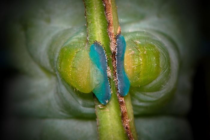 Caterpillar-Feet