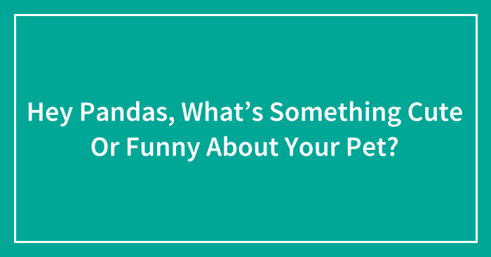 Hey Pandas, What's Something Cute Or Funny About Your Pet? (Ended)