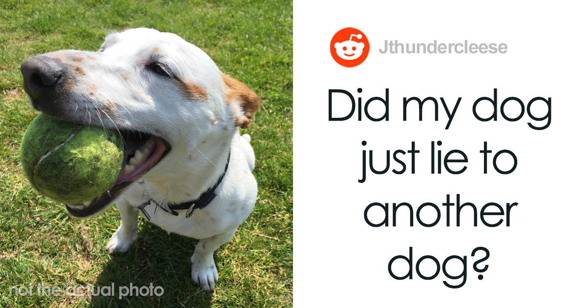 Guy Asks If His Dog Lied To Another Dog After Observing His Unusual Behavior - bored panda