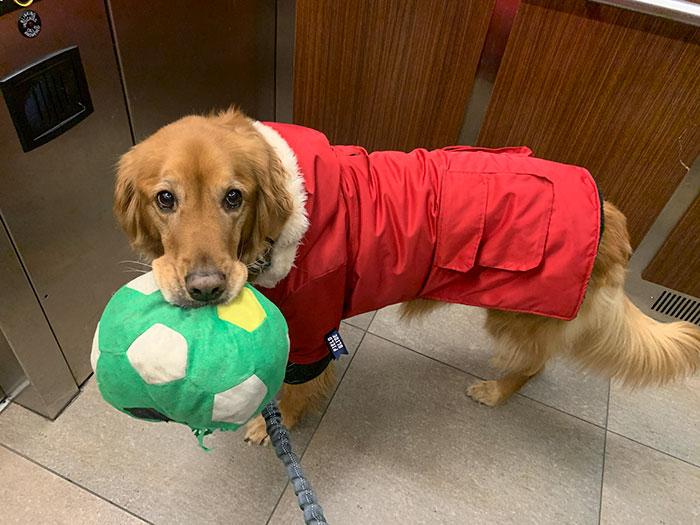 Dog-Golden-Retriever-Plush-Toys