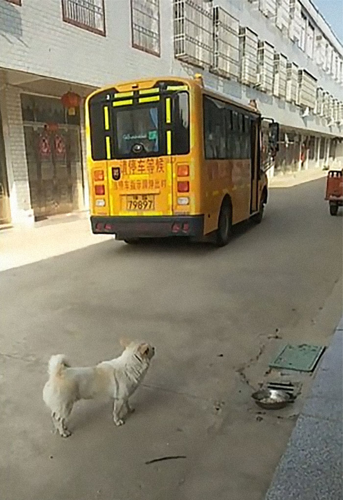 Wholesome Dog Takes His Little Owner To And From The School Bus Every Day
