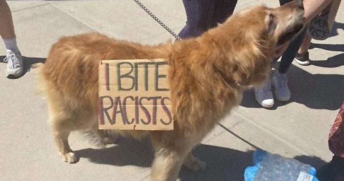 People Are Posting Pics Of Dogs Protesting For Justice, And They're Too Cute (30 Pics)