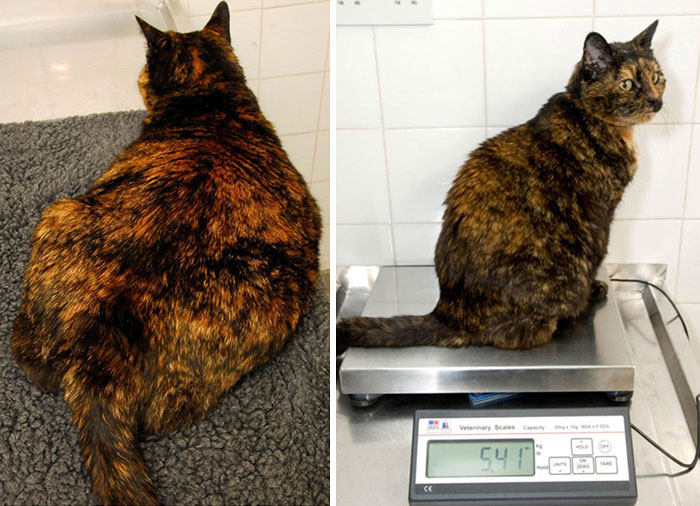 After Losing 17% Of Her Bodyweight, Amber Became Less Sleepy And More Interested In Playing