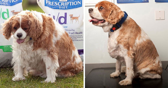 Jack Went From 20.5 To 14.1 Kg In 6 Months