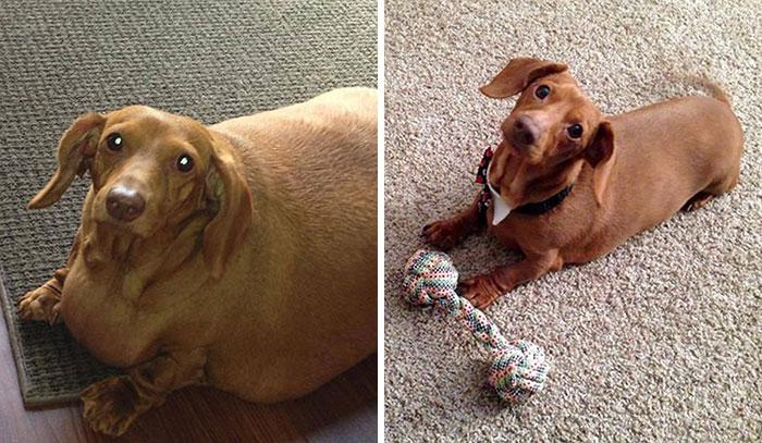 30 Adorables perros que consiguieron perder peso