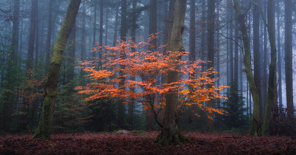 I Photographed The Same Forest For 7 Years During All Seasons