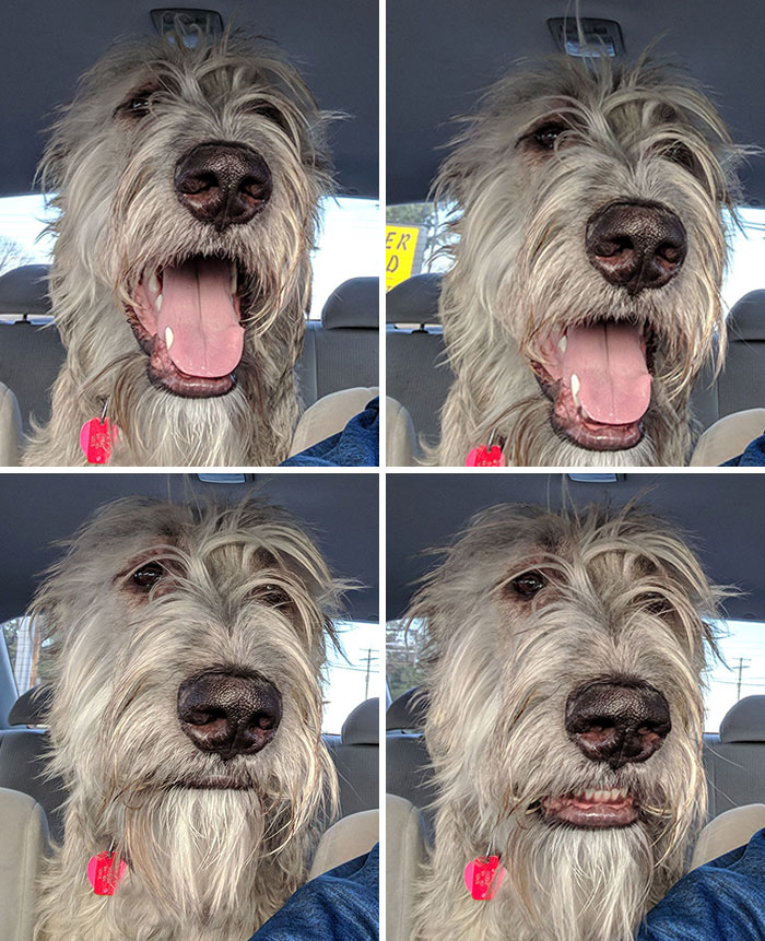 My Dog's Facial Expressions When I Didn't Turn Towards The Dog Park
