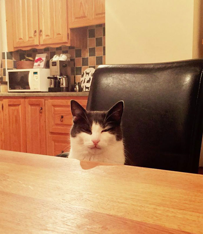 I Kicked Over My Cat's Milk And Had No Replacement. He Sat Opposite Me As I Ate My Dinner Looking At Me Like This