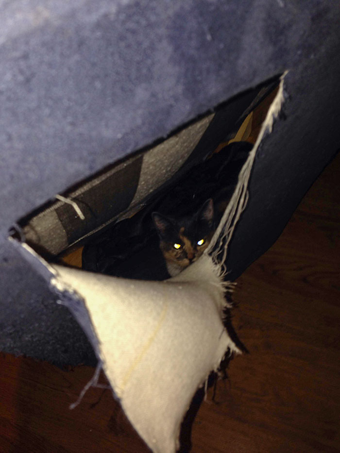 Bought A Couch From Craigslist, Heard Noises Coming From It After Bringing It Home. Cut It Open And Found A Cat