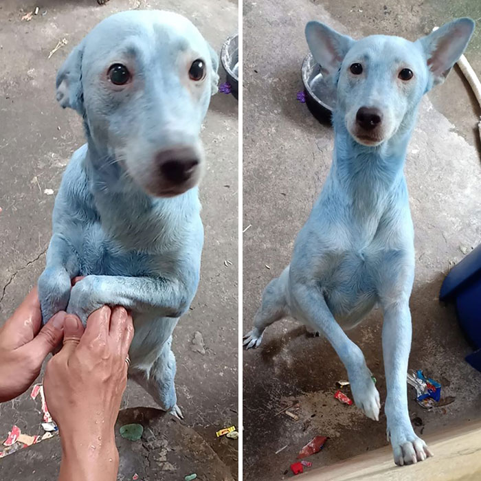 Owner Used The Wrong Shampoo (It's Hair Dye)