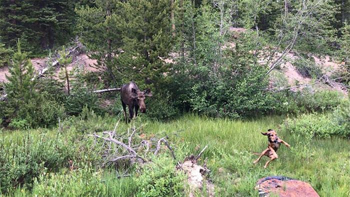 My Buddy's Dog Saw A Moose