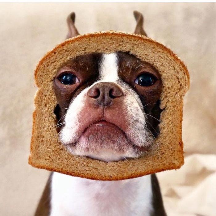An Open Faced Sandwich