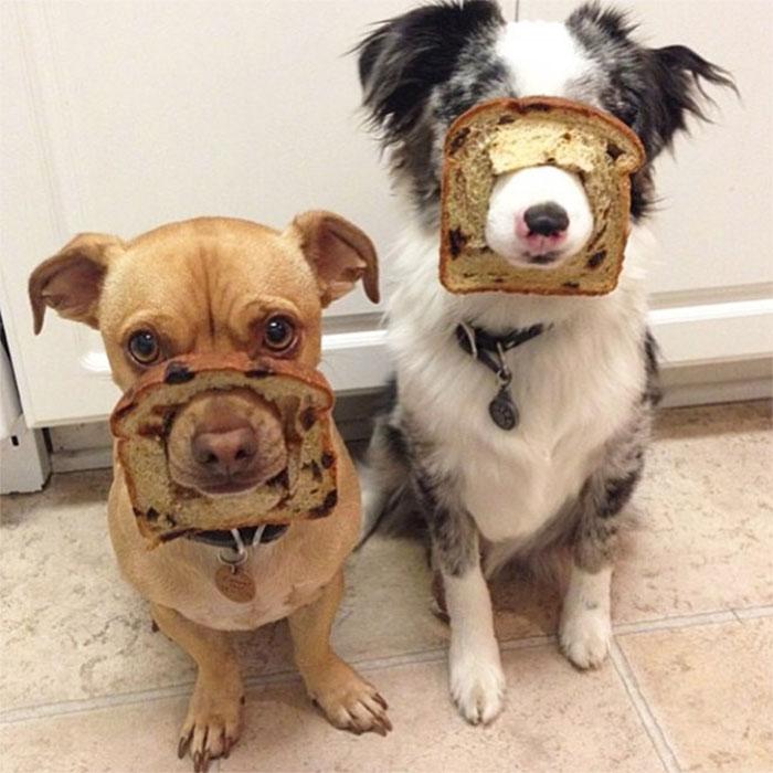 Inbread Companions