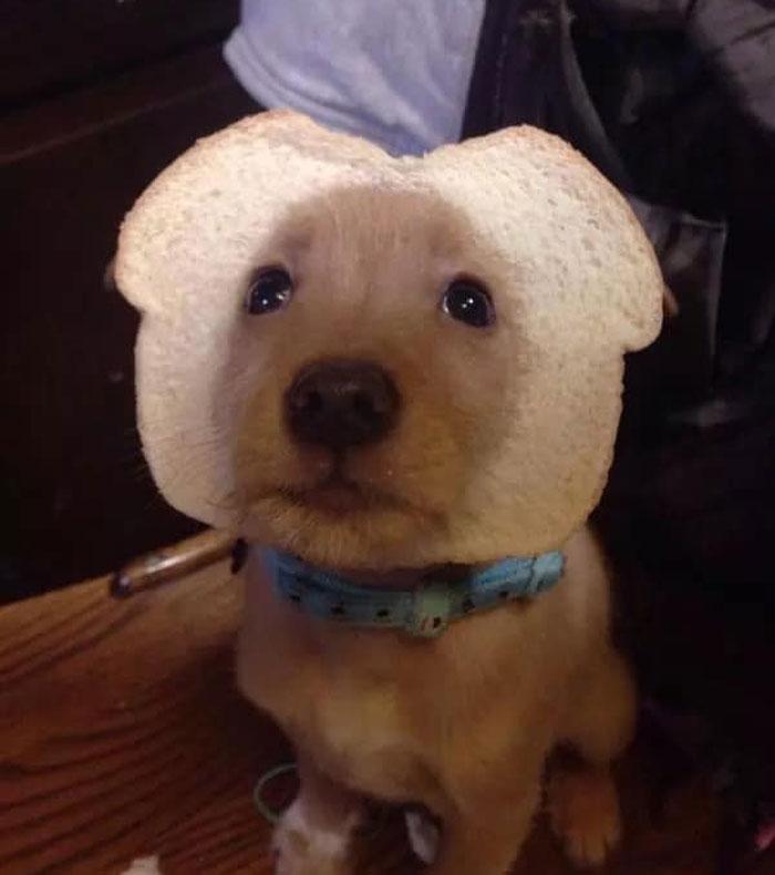 My Puppy Roo