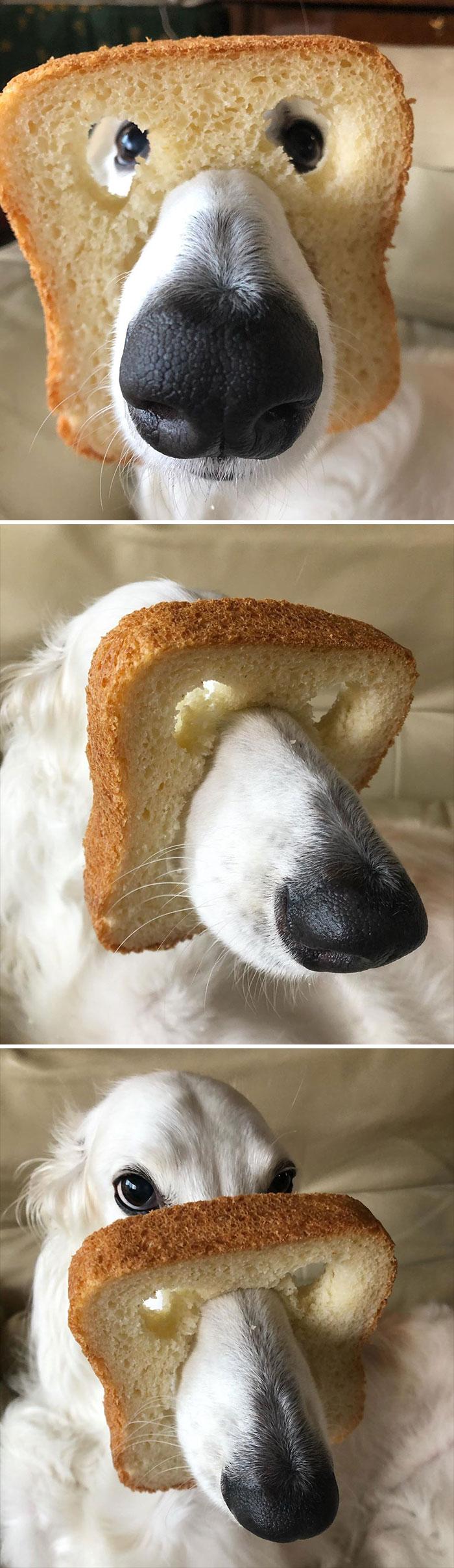 Purebread Or Inbread Doggo?