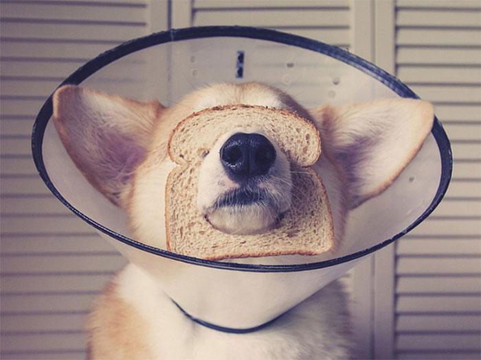 Inbread Conehead
