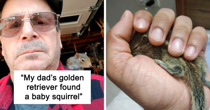 96 Squirrel Posts To Make Your Day