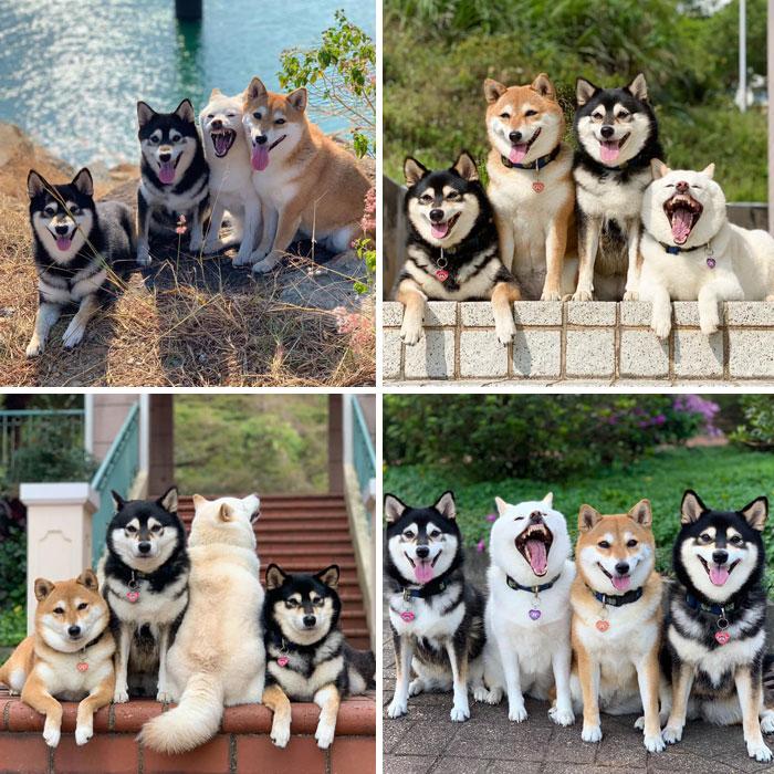 https://static.boredpanda.com/blog/wp-content/uploads/2020/06/funny-dogs-pictures-40-5ed8e741d6199__700.jpg