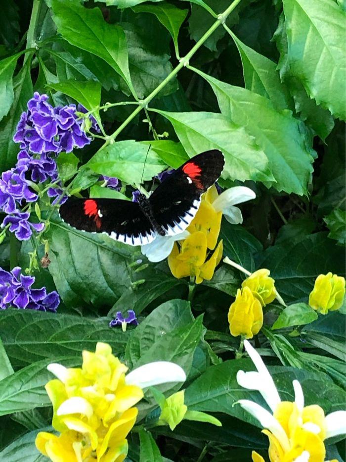 Butterfly Garden In Hershey Park
