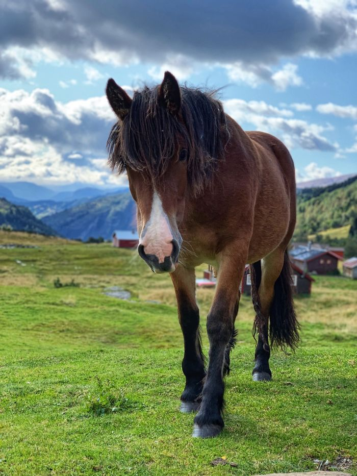 Curious Horse - Norway