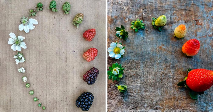 People Are Sharing Photos Of Life Cycles Of Different Living Things (24 Pics)