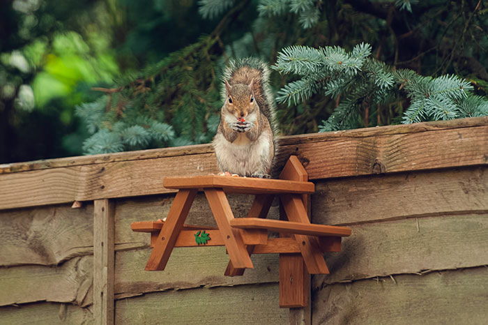 Watching Squirrels In My Garden Became A Morning Ritual During Lockdown, Here Are 15 Photos That I Took