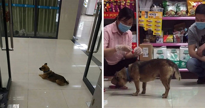 Dog Waits For His Owner In A Wuhan Hospital Not Knowing He Died From Covid-19 Months Ago